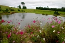 Cosmos in the Midlands_1