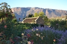 Club Photo Competition 2012 :: Cedarberg flowers & cottage_1
